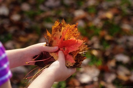 gathering-colorful-fall-leaves